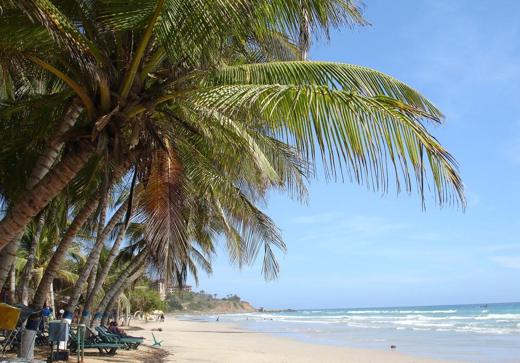 karibikinsel strand palmen